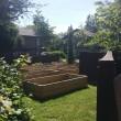 community gardens in progress